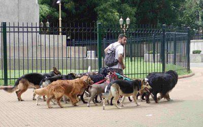 Dog walker Argentina