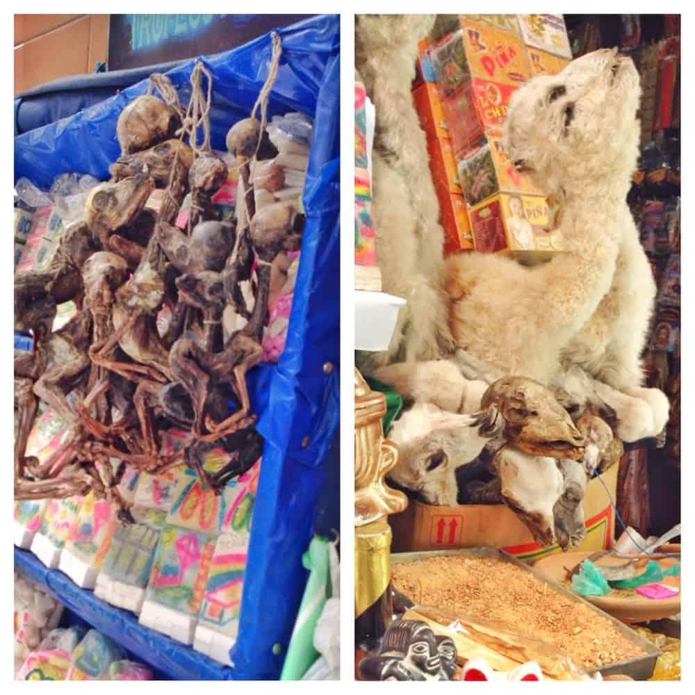 mummified llama foetuses