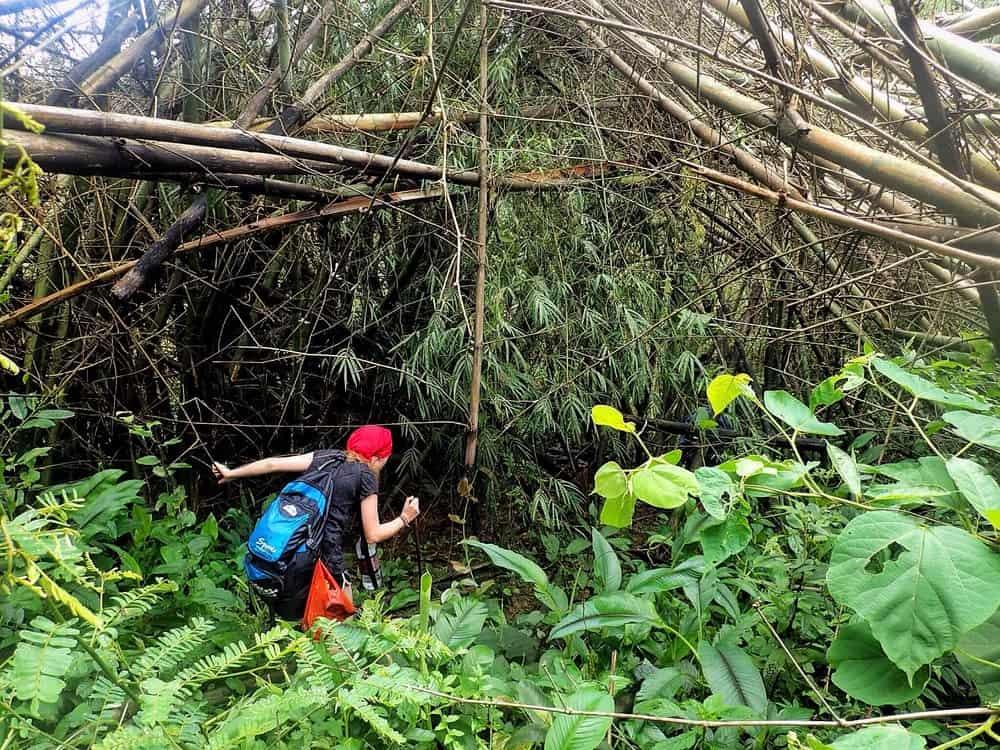 Hacking their own path through the jungle