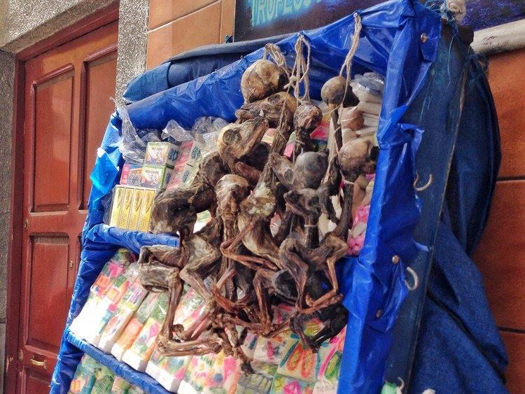 dried llama foetuses