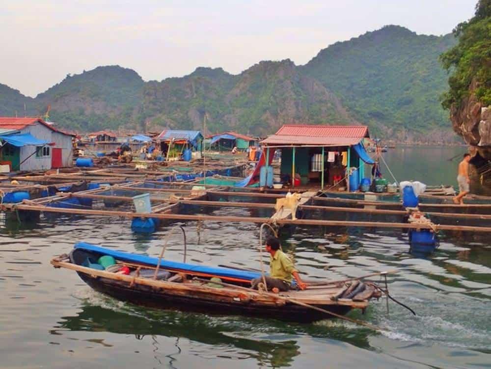 Floating fishing village in Lan Ha Bay