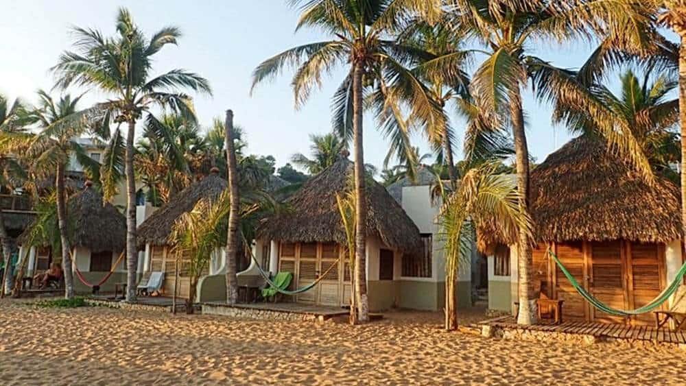 oconut-trees
