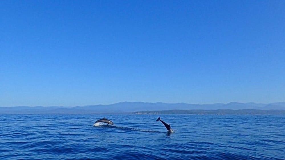 dolphins mazunte oaxaca