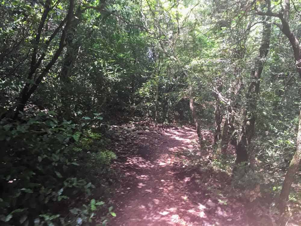 Woodland Area on Montserrat HIking Trails