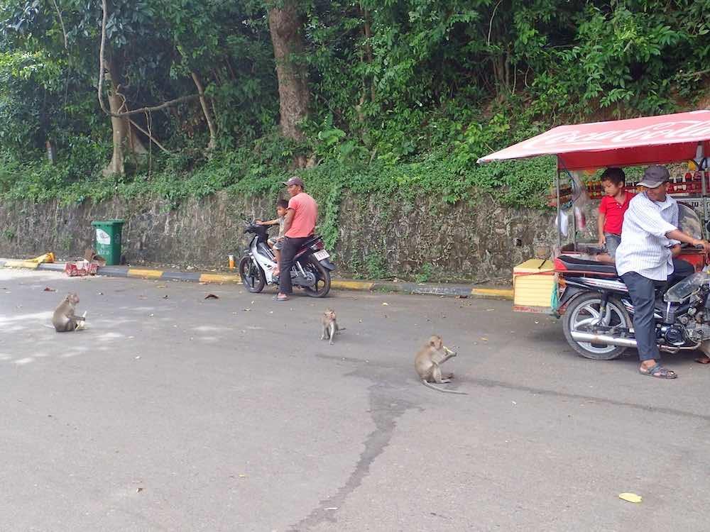 rabies traveller vaccine