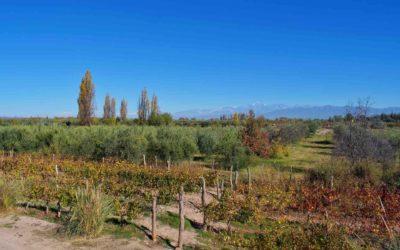 Self Guided Mendoza Wine Bike Tour