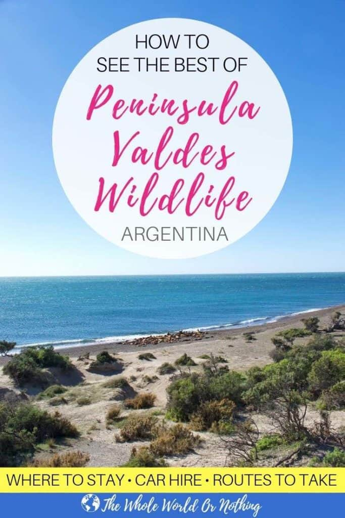 Seals on shoreline with text overlay How To See The Best Of Peninsula Valdes Wildlife Argentina