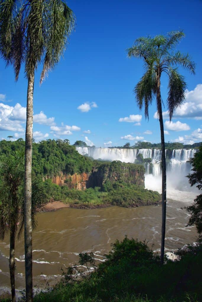 Palm Trees in Front of Iguazu Falls