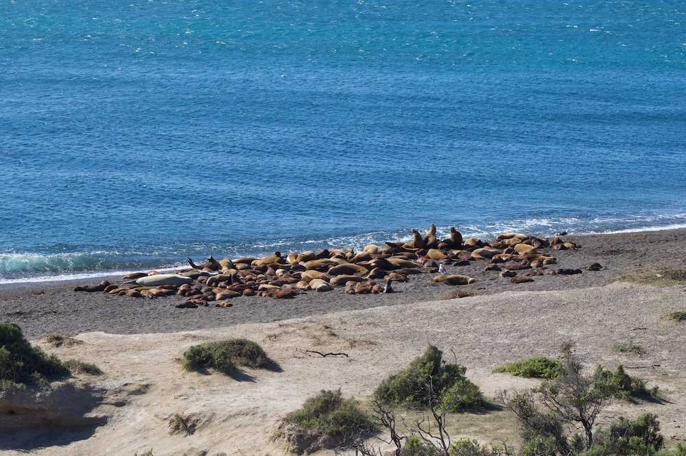 Seals on Peninsula Valdes