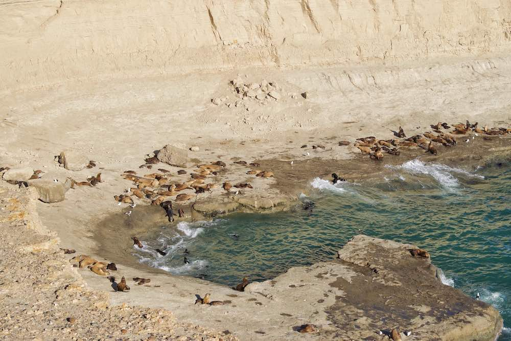 Sea Lion Colony at Punta Pyramids on Peninsula Valdes