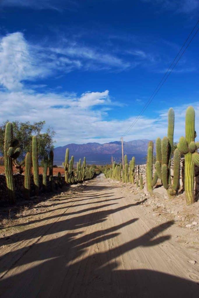Bodega San Pedro Yacochuya driveway