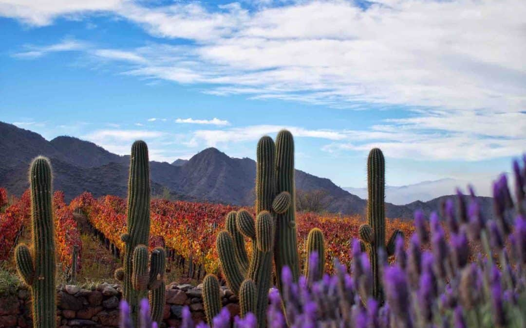 Cafayate – The Ultimate Guide