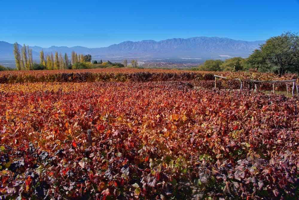 Cafayate wine