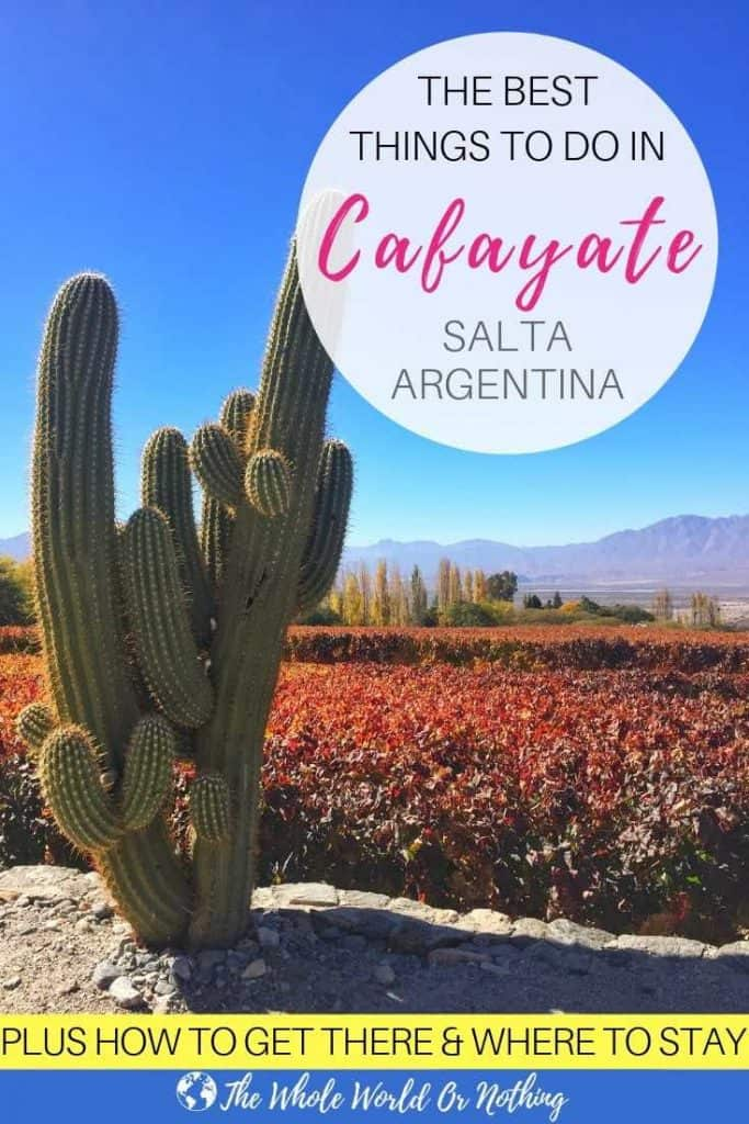 Vineyard and cactus with text overlay The Best Things To Do In Cafayate Salta Argentina