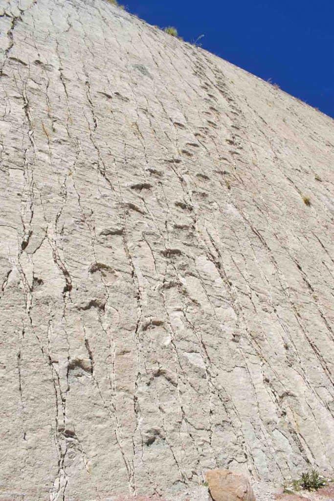 dinosaur footprints bolivia
