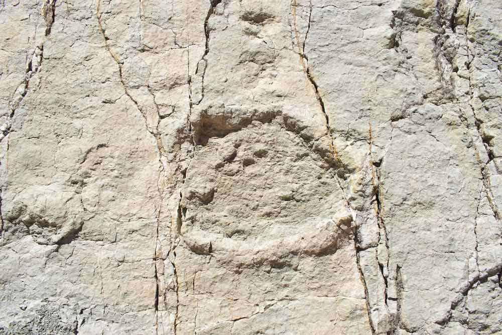 real dinosaur footprints