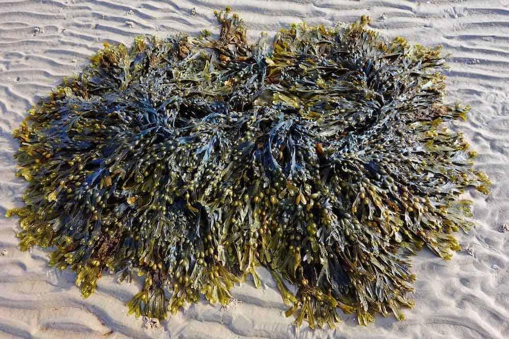 Seaweed baths Enniscrone Sligo
