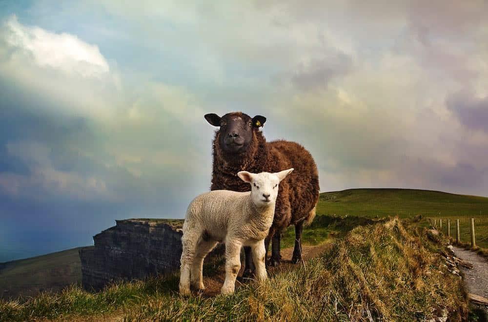 places to see in Sligo Ireland