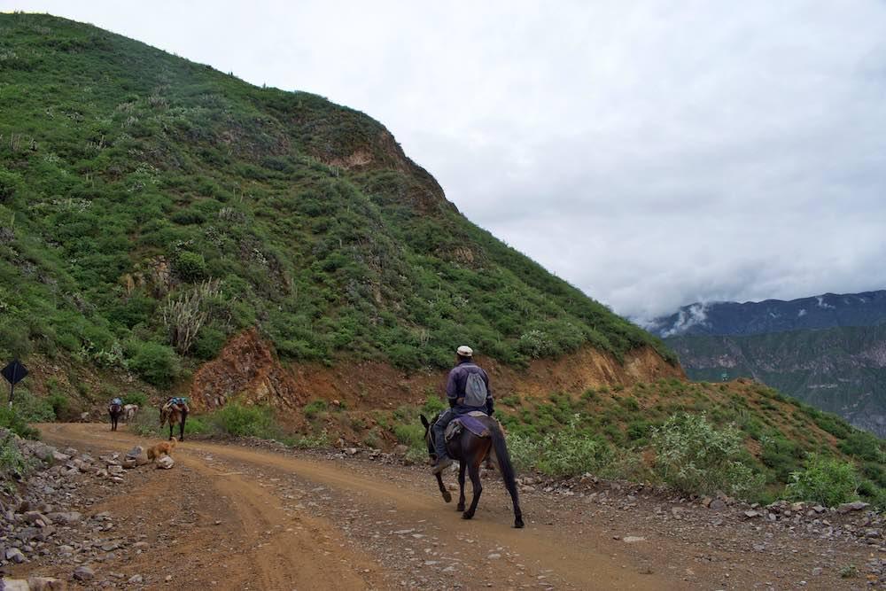 Colca Canyon Mules