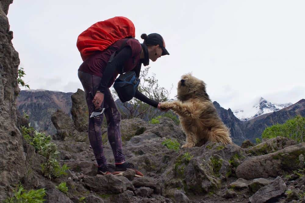 Colca Canyon hike with dog