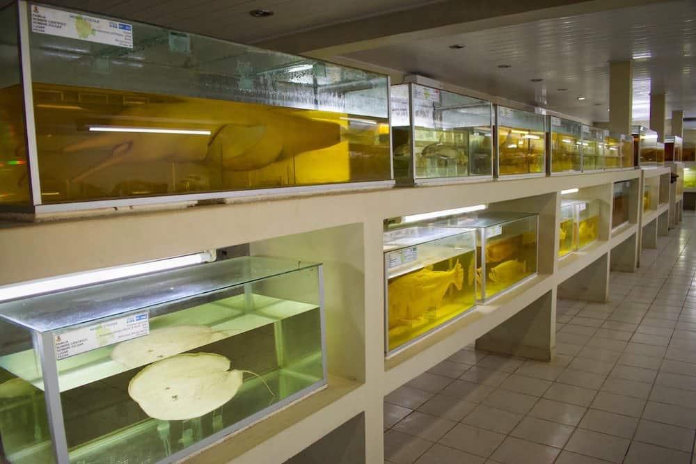 Fish Museum Trinidad Bolivia
