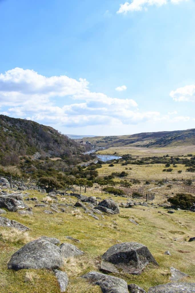 Forest in Teesdale