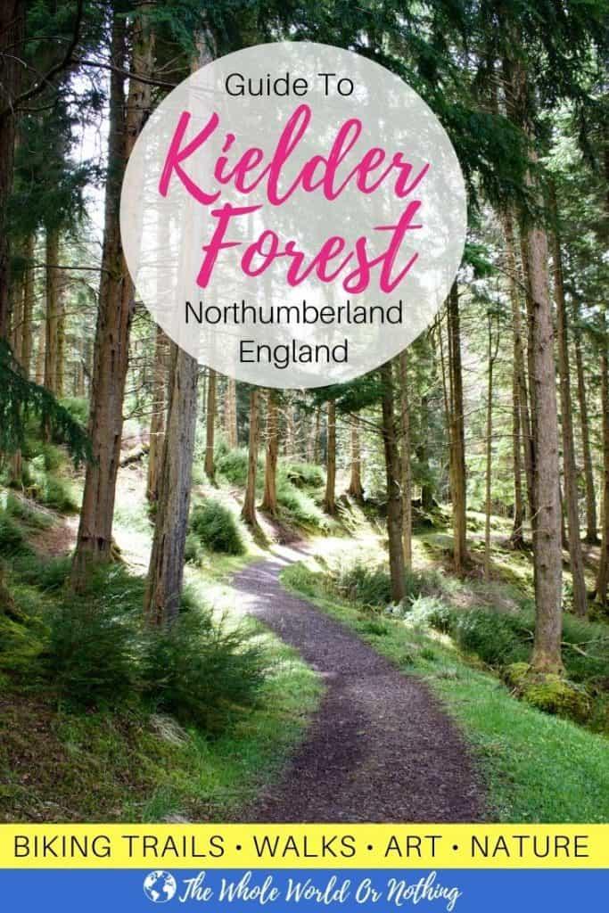 Kielder forest trees