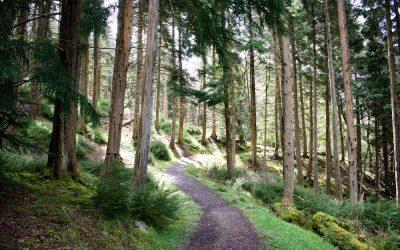 Kielder Forest Northumberland