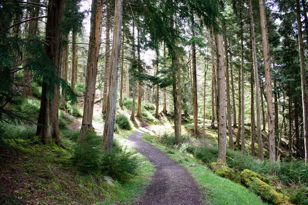 13 Things To Do in Kielder Forest Northumberland