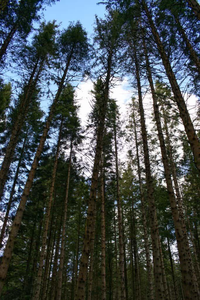 Kielder Forest dark skies