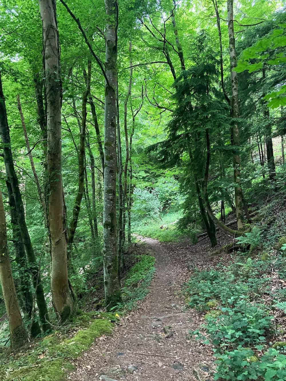 Betws y Coed Fairy Glen walk