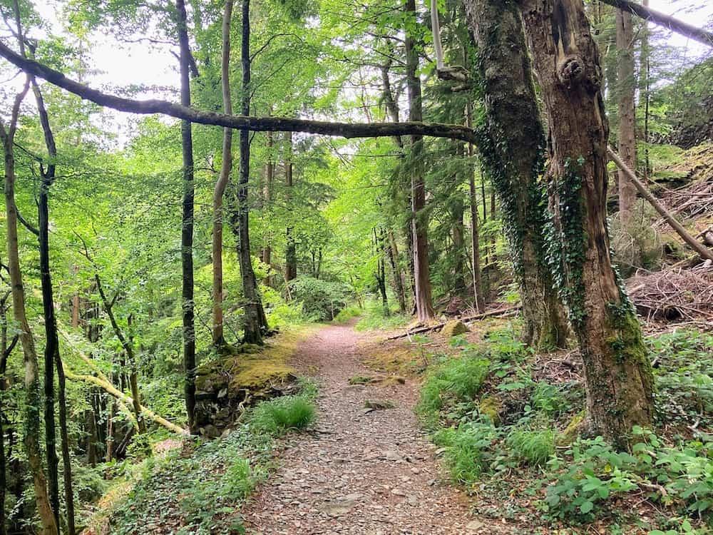 Path through Snowdonia National Park