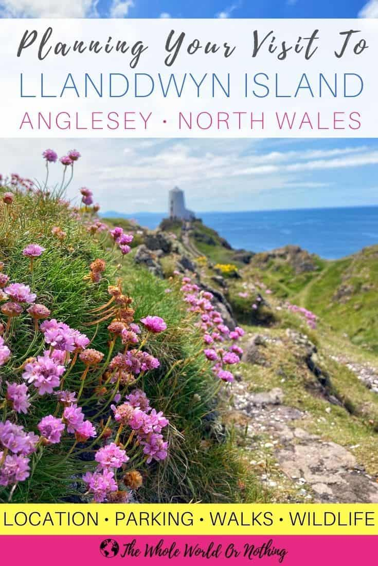 Purple flowers with lighthouse in background and text overlay planning your visit to Llanddwyn Island