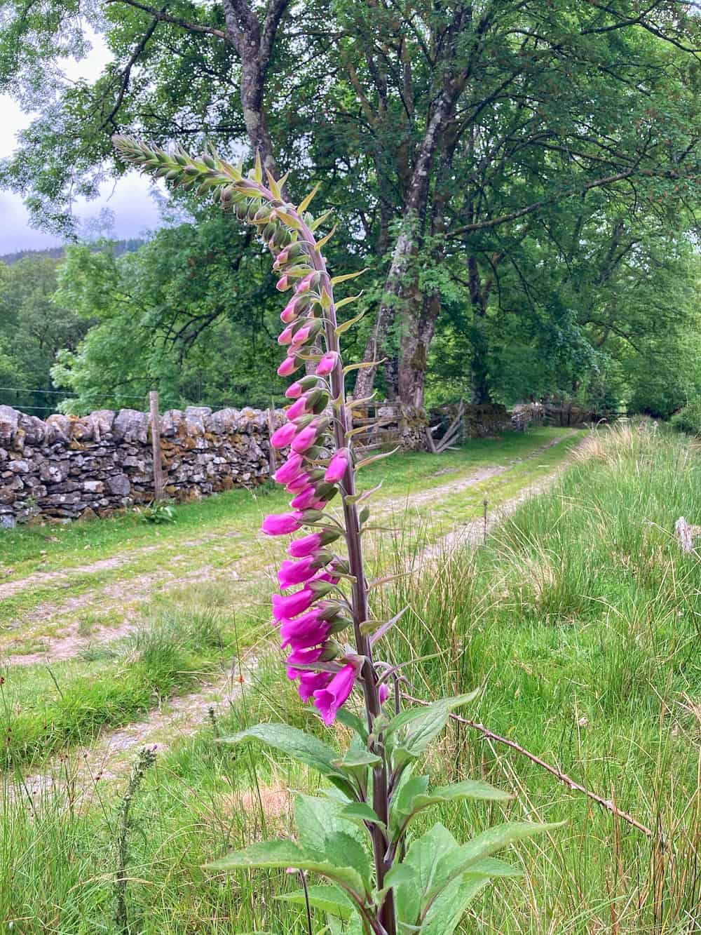 Path from Betws y Coed to Conwy Falls