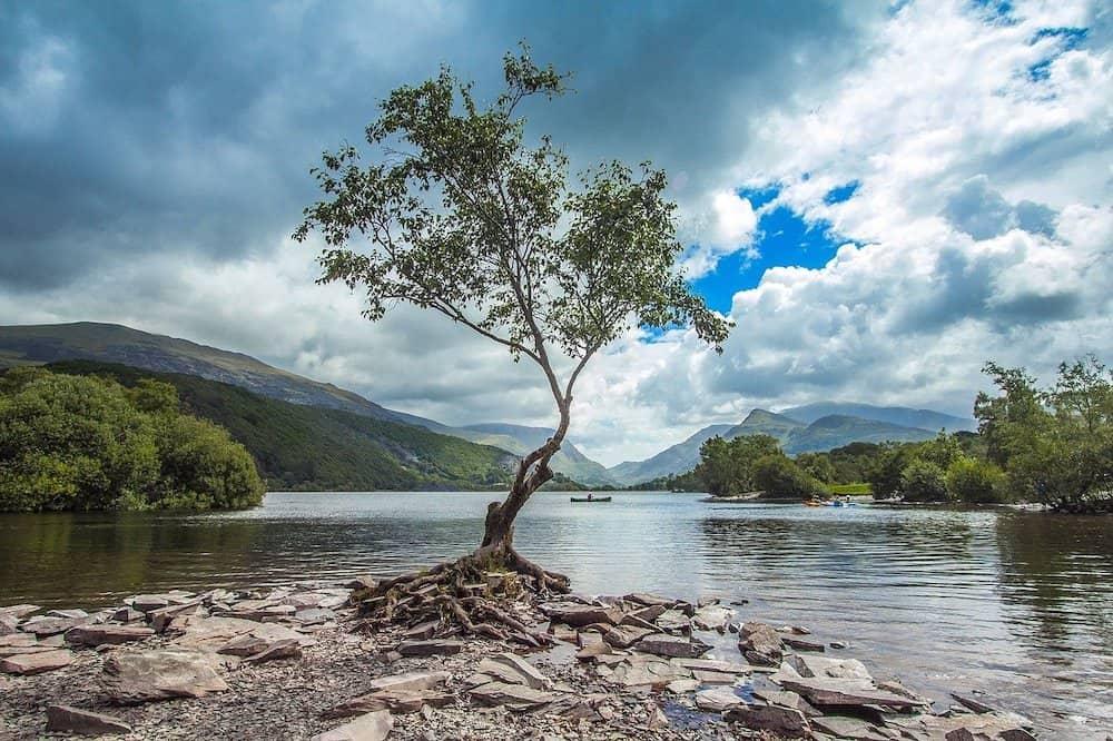 Snowdonia National Park tree
